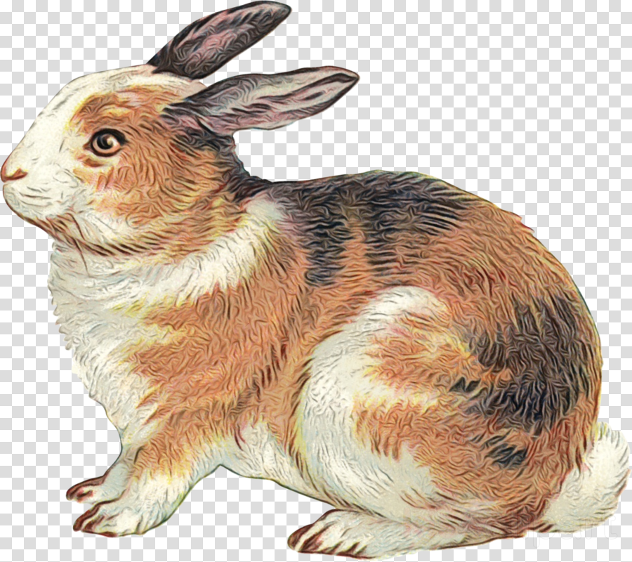 rabbit rabbits and hares hare animal figure snowshoe hare