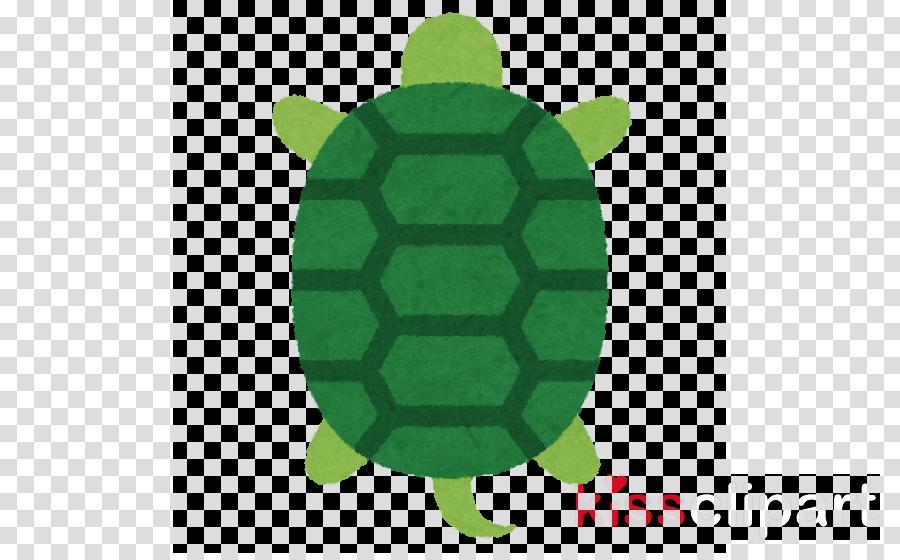 green sea turtle turtle green sea turtle tortoise