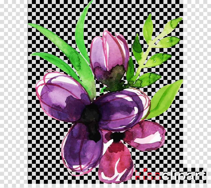 flower violet plant purple petal
