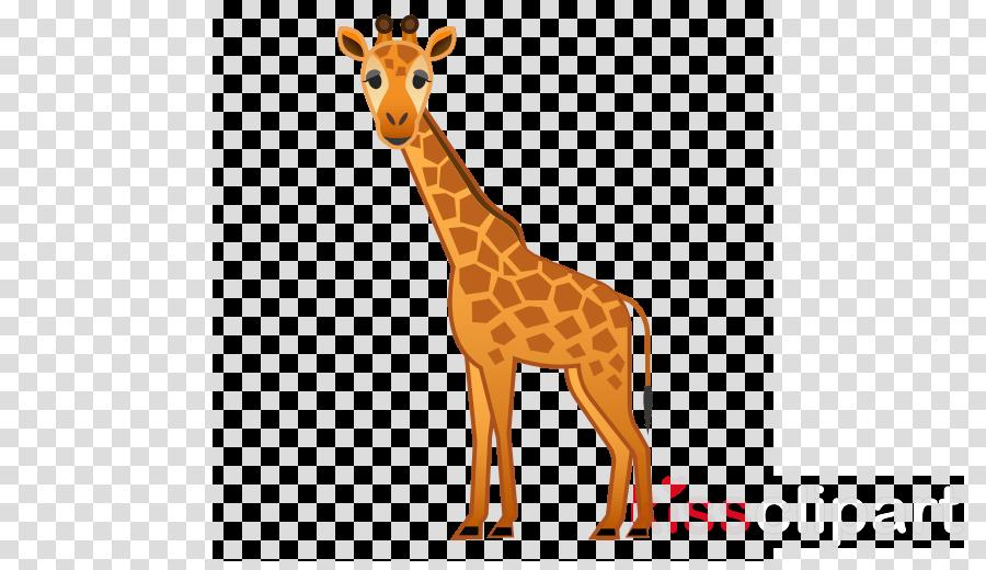 giraffidae giraffe wildlife animal figure snout