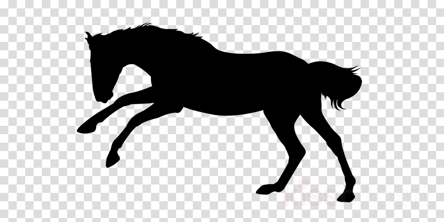 horse hair mane black white