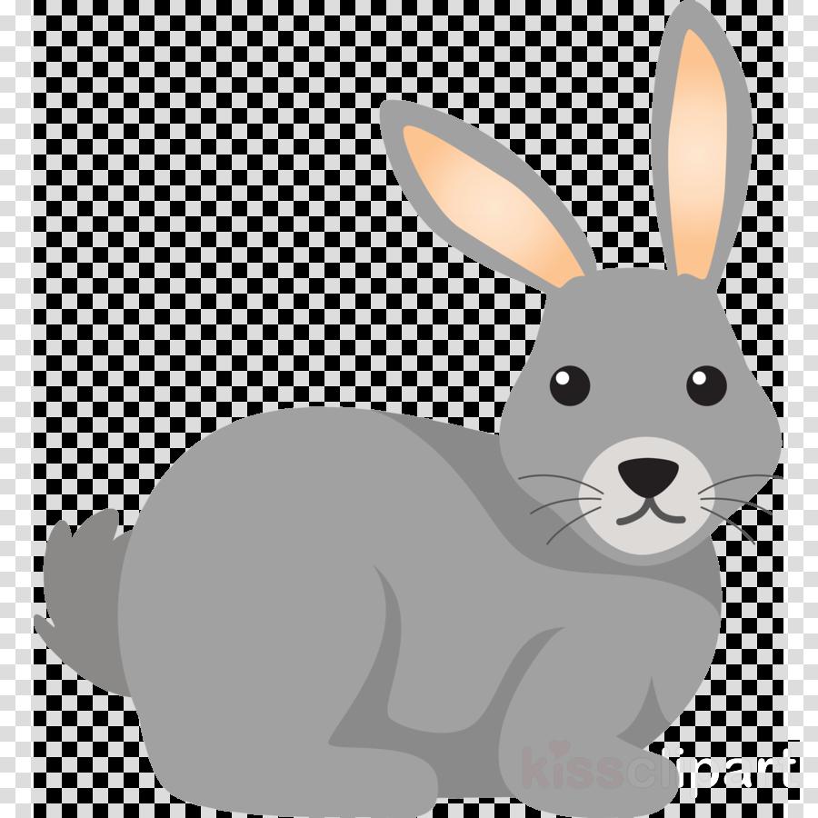 rabbit cartoon rabbits and hares hare snowshoe hare