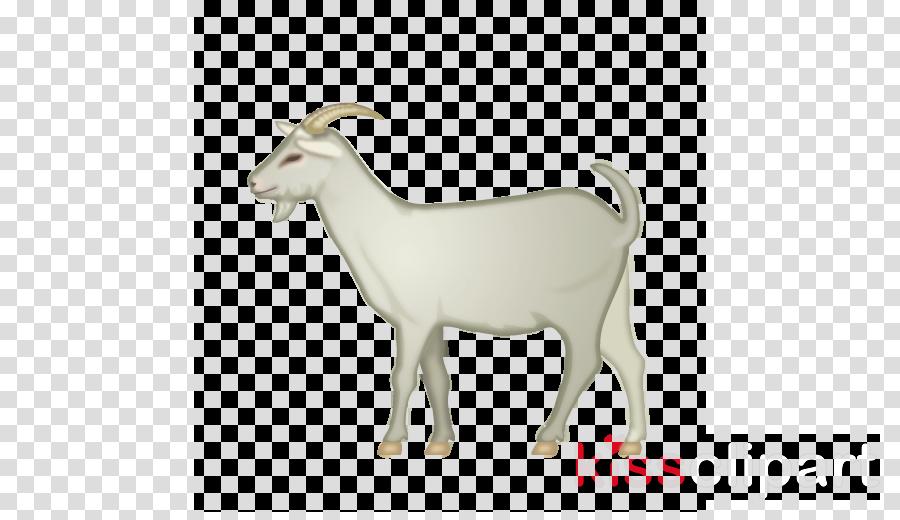 goat goats goat-antelope cow-goat family horn
