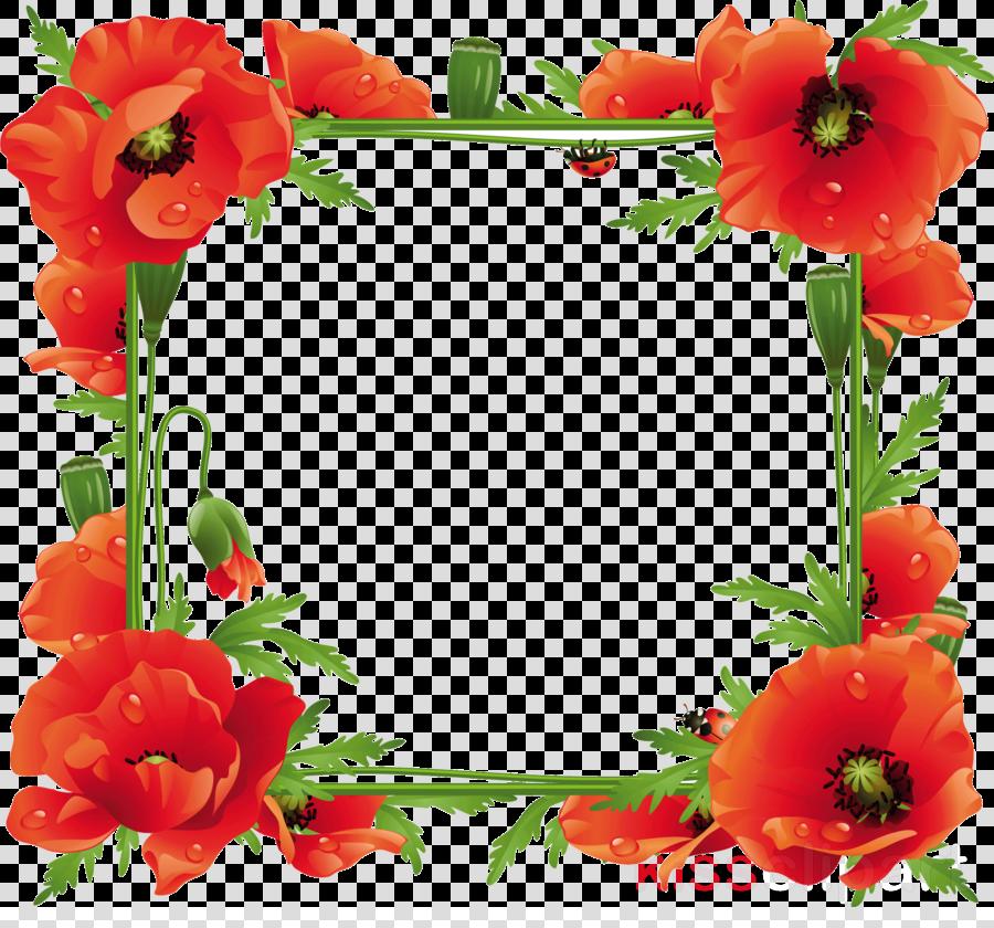 poppy frame flower frame floral frame