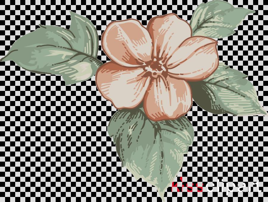 flower hawaiian hibiscus plant leaf petal