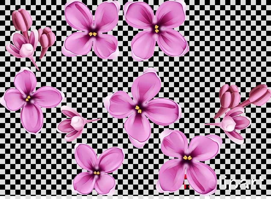 pink petal flower plant lilac