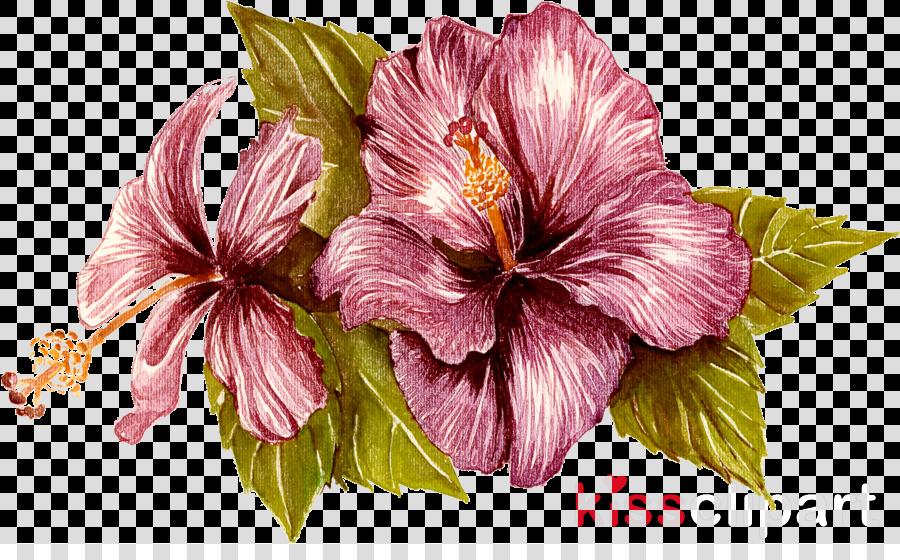 flower hawaiian hibiscus hibiscus petal plant