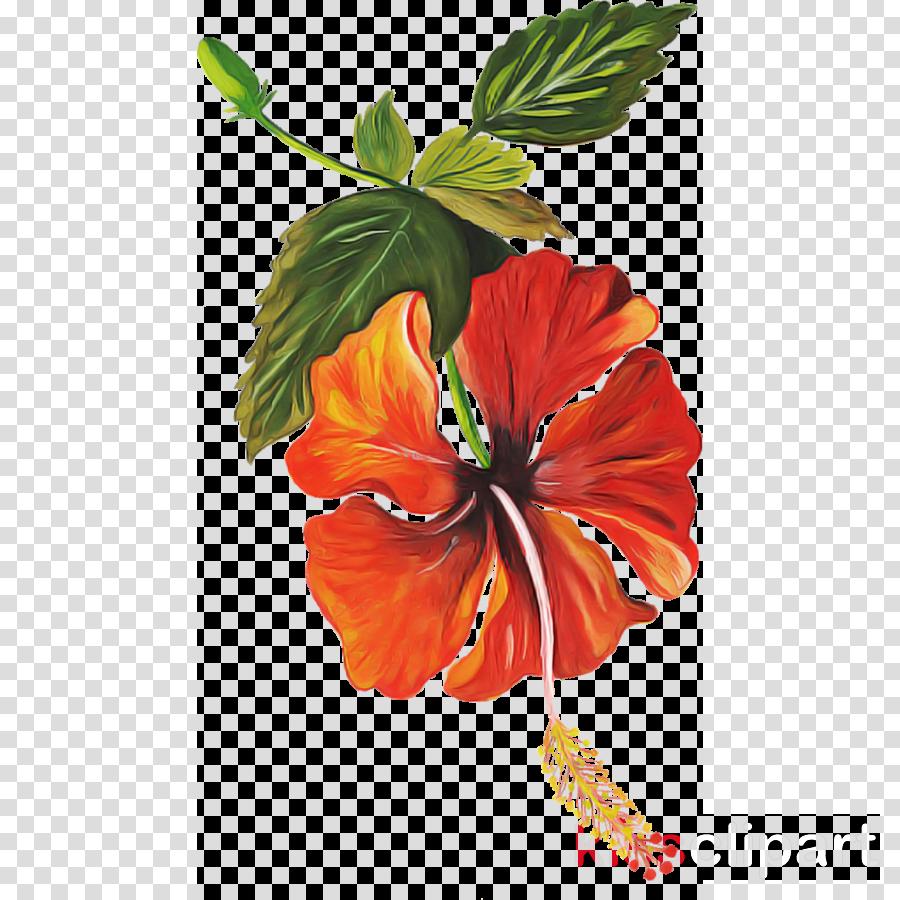 flower hibiscus hawaiian hibiscus plant chinese hibiscus
