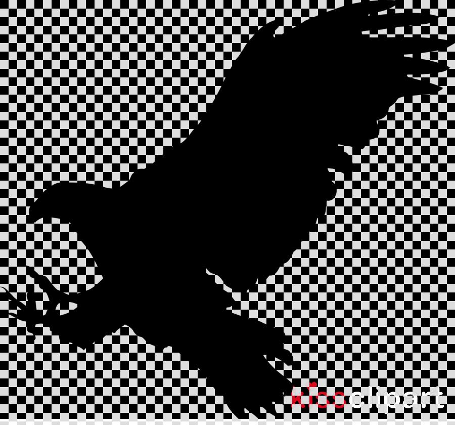 bird bird of prey eagle beak golden eagle