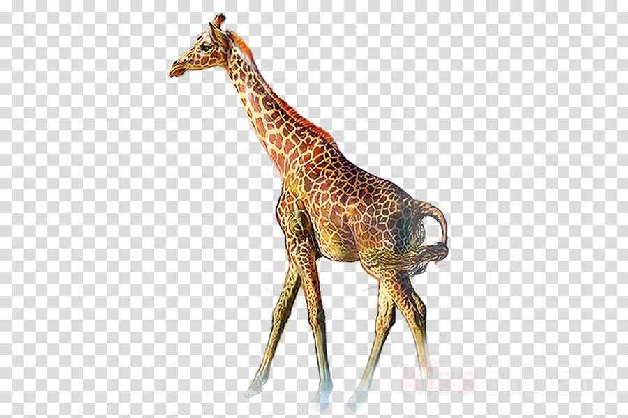 giraffe giraffidae animal figure wildlife snout