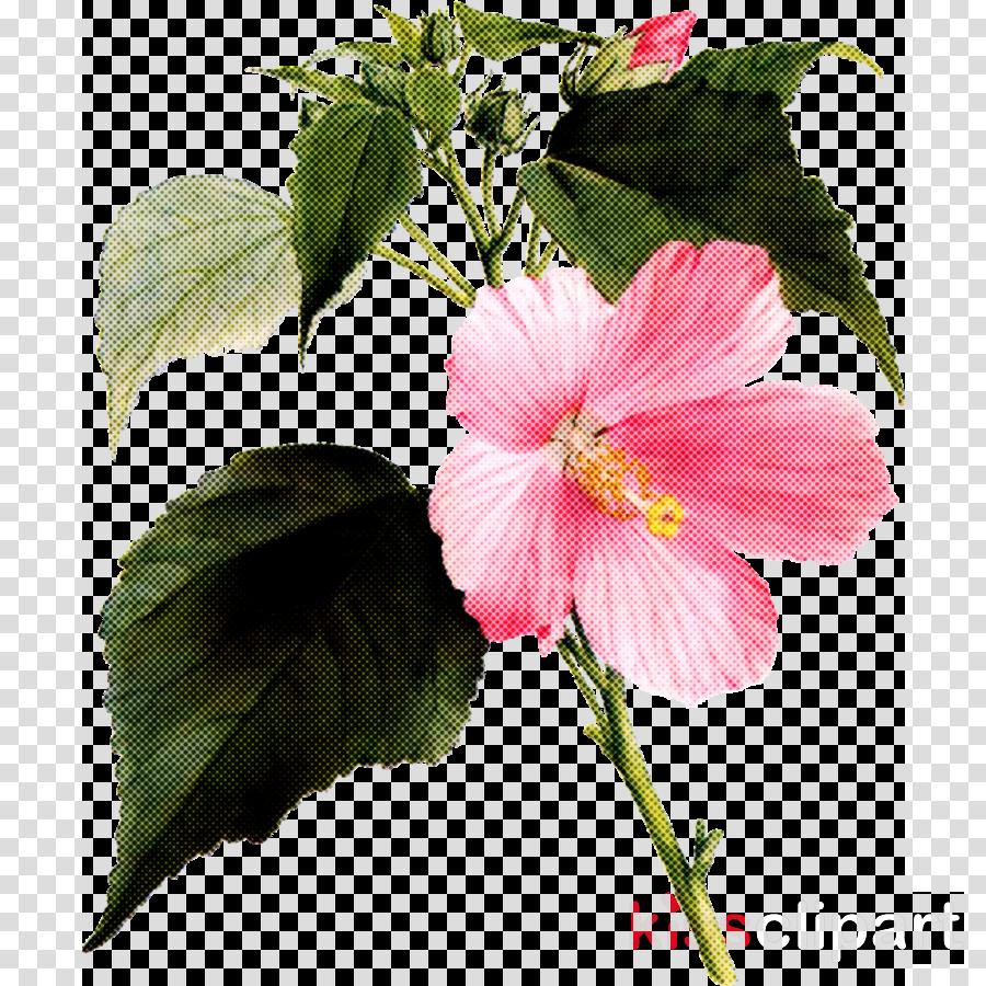 flower plant petal hawaiian hibiscus pink