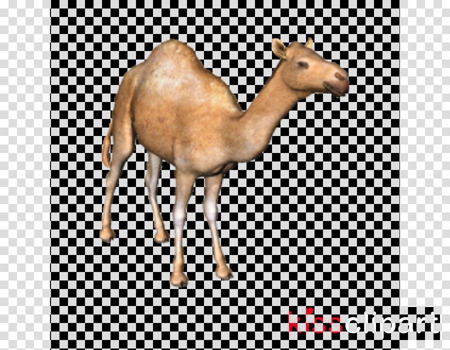camel animal figure camelid arabian camel wildlife