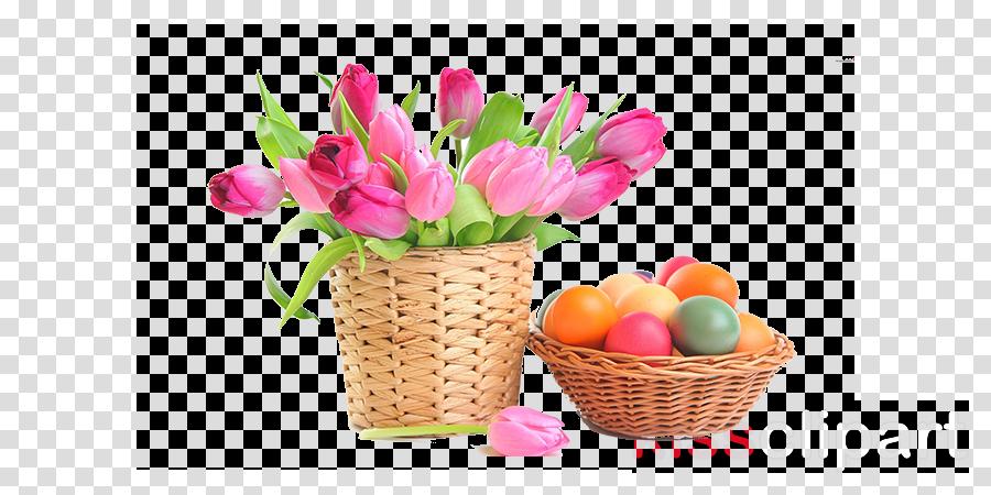 tulip flower pink plant flowerpot