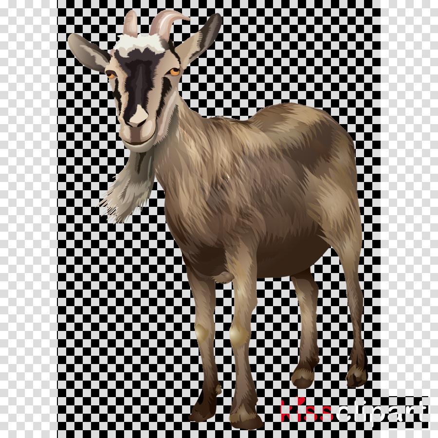 goats goat cow-goat family goat-antelope feral goat