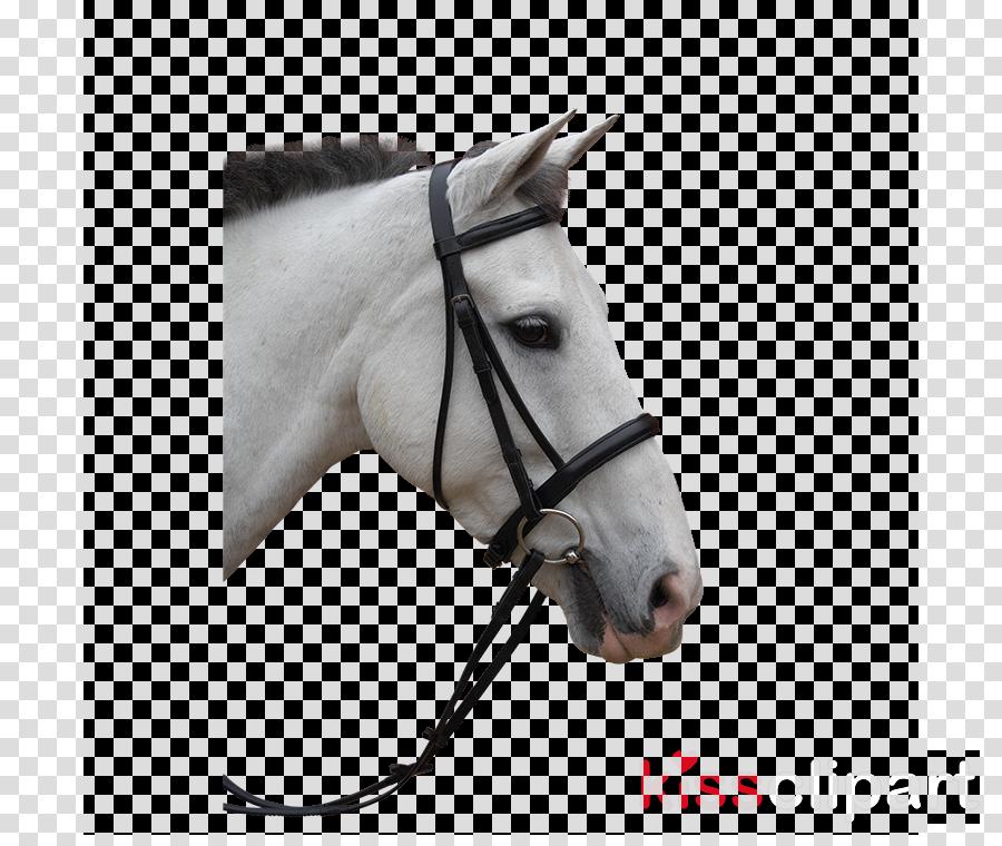 halter bridle horse horse tack rein