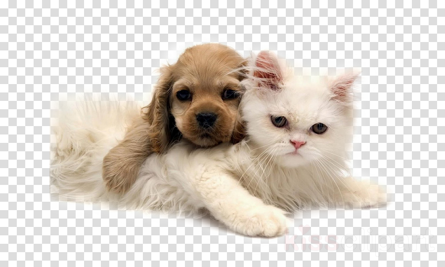 cat puppy skin small to medium-sized cats kitten
