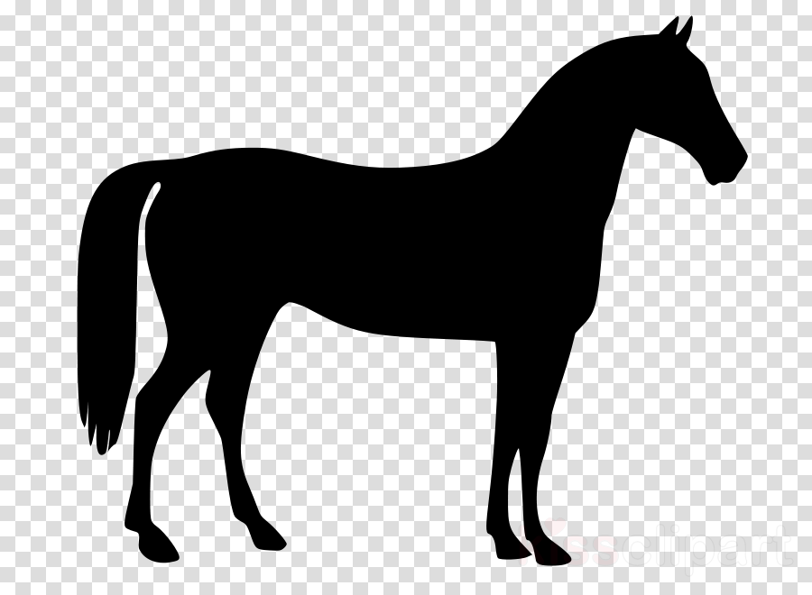 horse mane mare animal figure line art