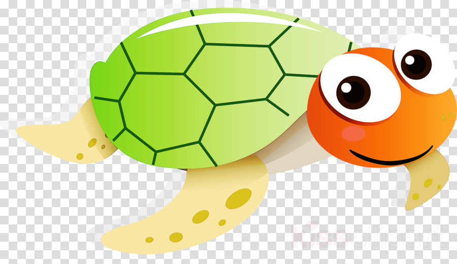 tortoise turtle green cartoon sea turtle