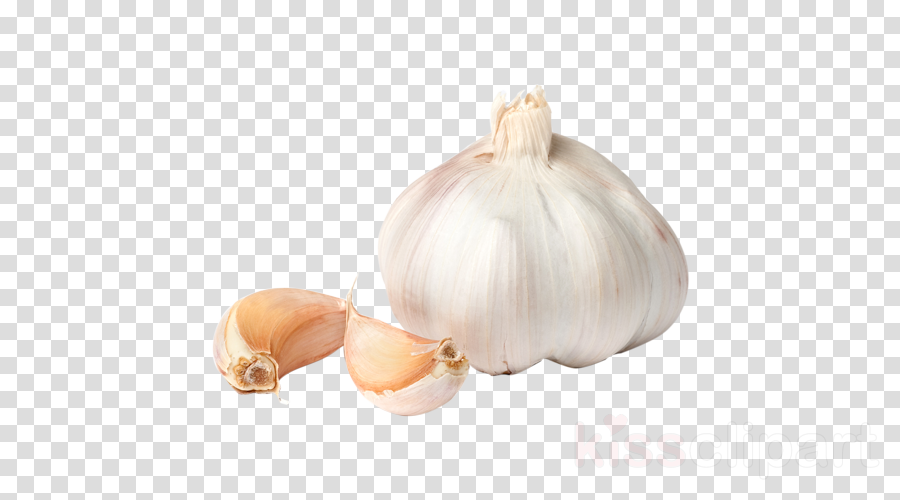 garlic vegetable plant elephant garlic allium