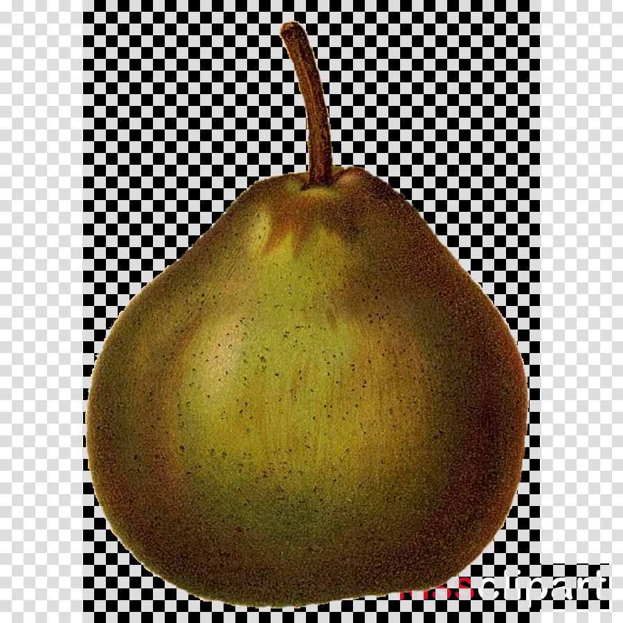 pear pear tree fruit plant