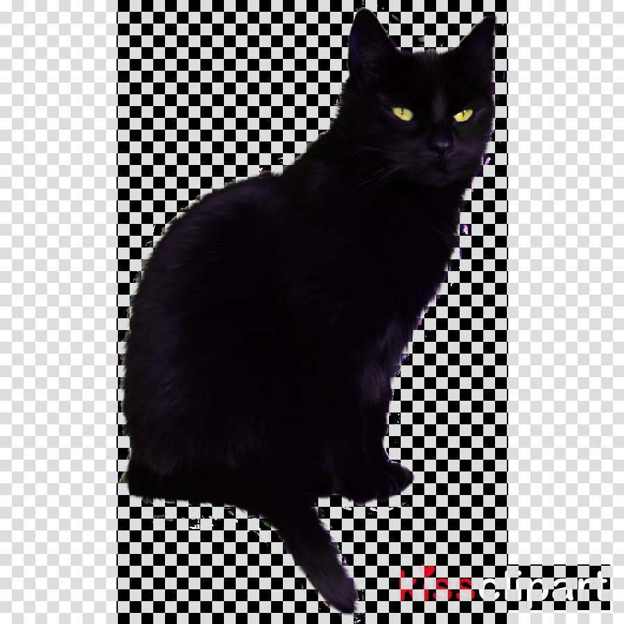 cat black cat small to medium-sized cats bombay black
