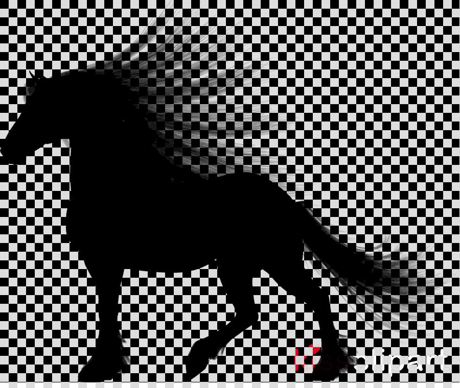 horse mane stallion mare black-and-white