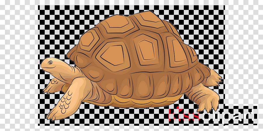 tortoise turtle pond turtle reptile chelonoidis