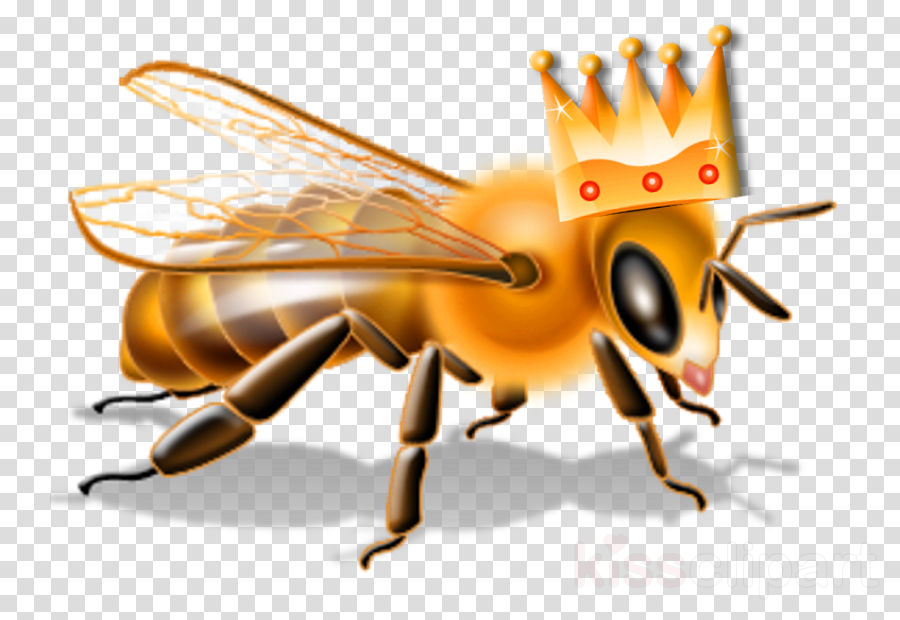 insect honeybee membrane-winged insect bee pest