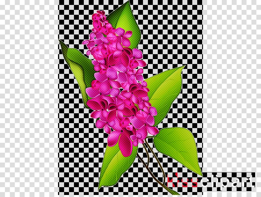 flower plant pink magenta petal