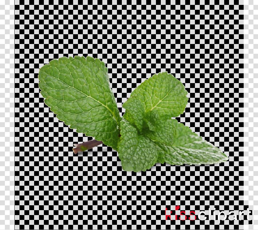 leaf plant mint flower herb