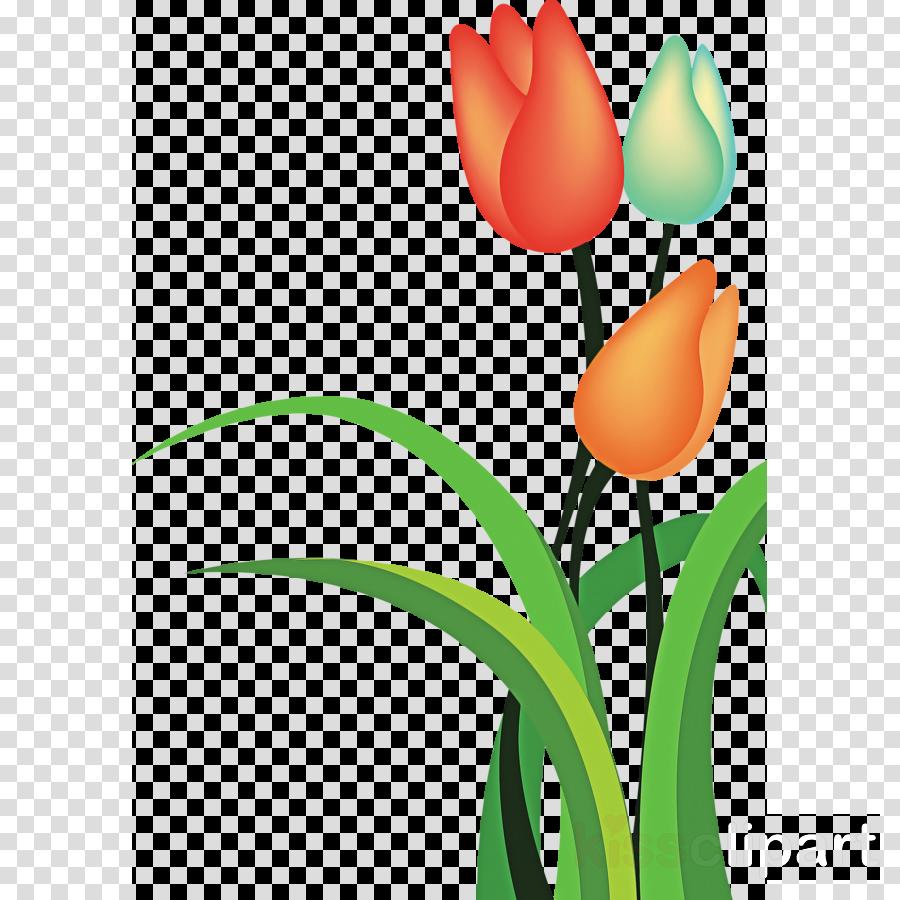tulip flower plant petal cut flowers