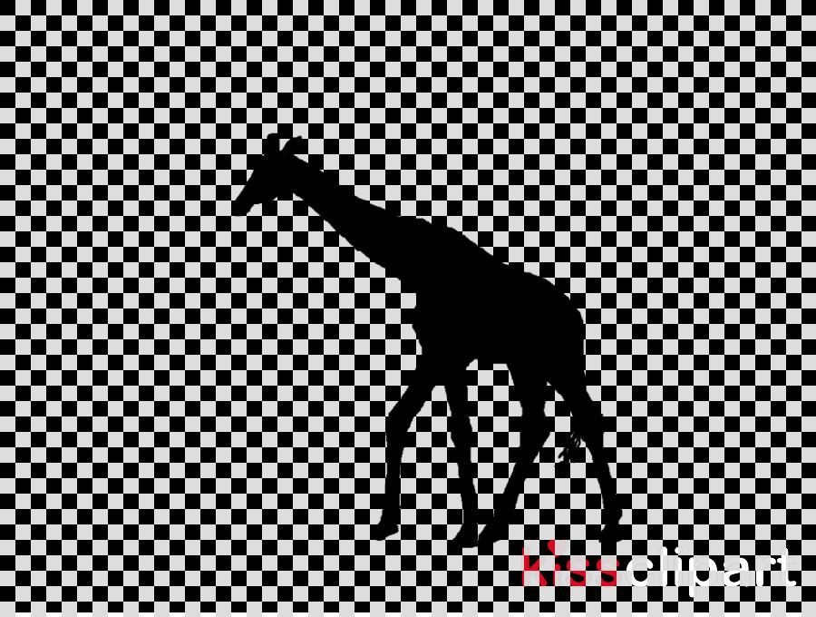 giraffe giraffidae black wildlife silhouette