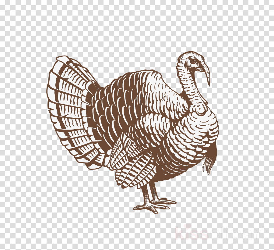 bird turkey flightless bird wild turkey drawing