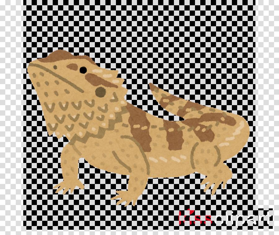 reptile lizard scaled reptile cartoon gecko