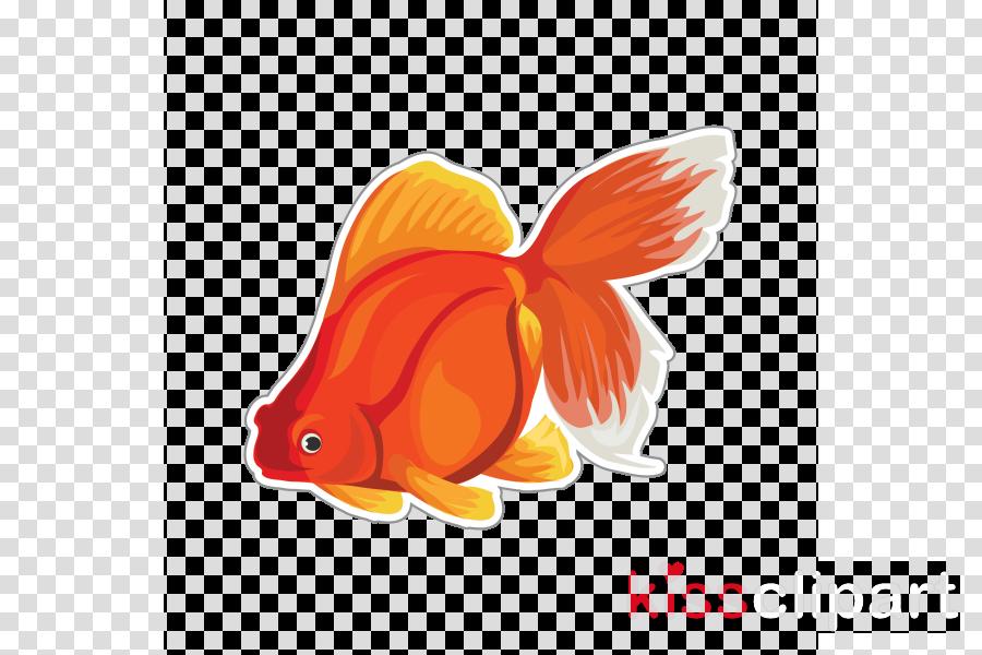 goldfish fish fish cartoon tail