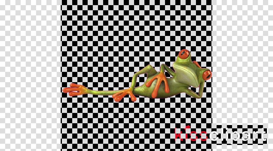 tree frog frog agalychnis tree frog red-eyed tree frog