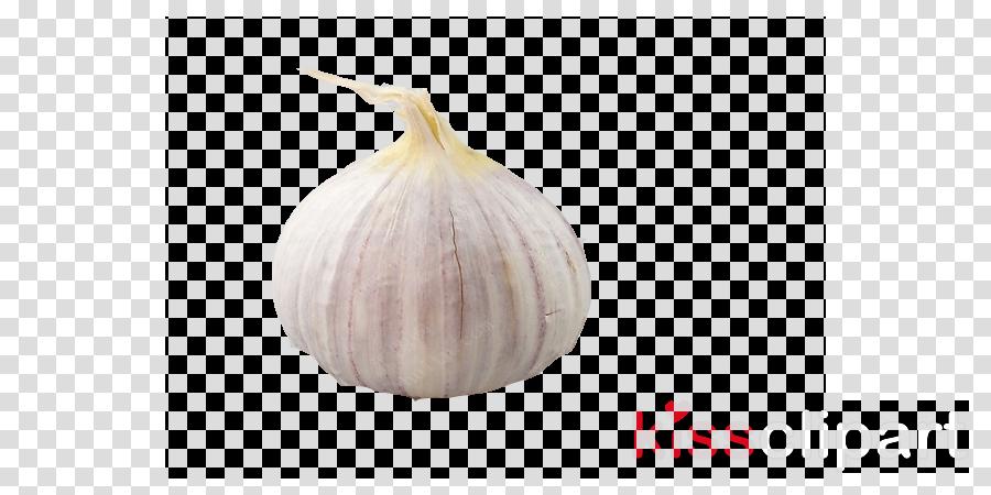 elephant garlic garlic food vegetable plant