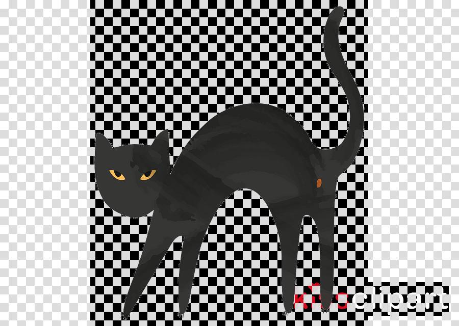 cat black cat small to medium-sized cats bombay tail