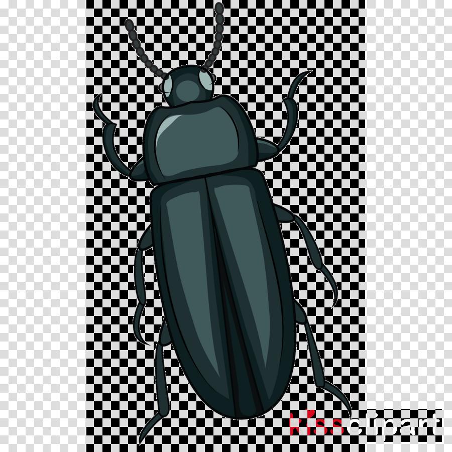 insect beetle stag beetles elephant beetle ground beetle