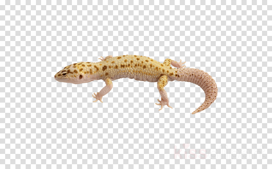 reptile lizard gecko scaled reptile animal figure