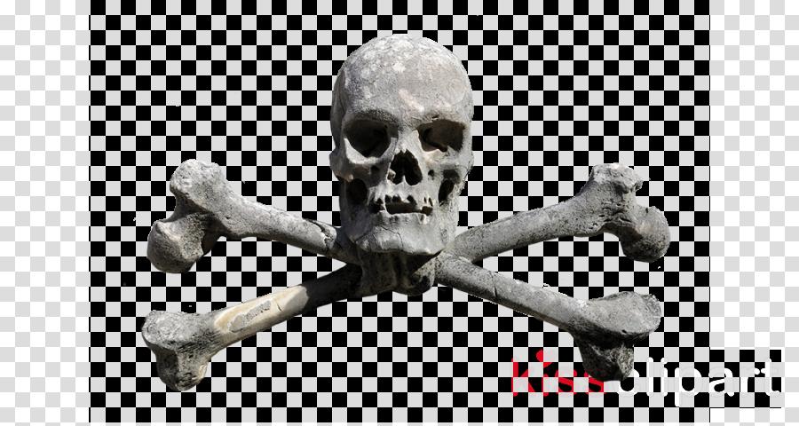 skeleton bone skull human jaw