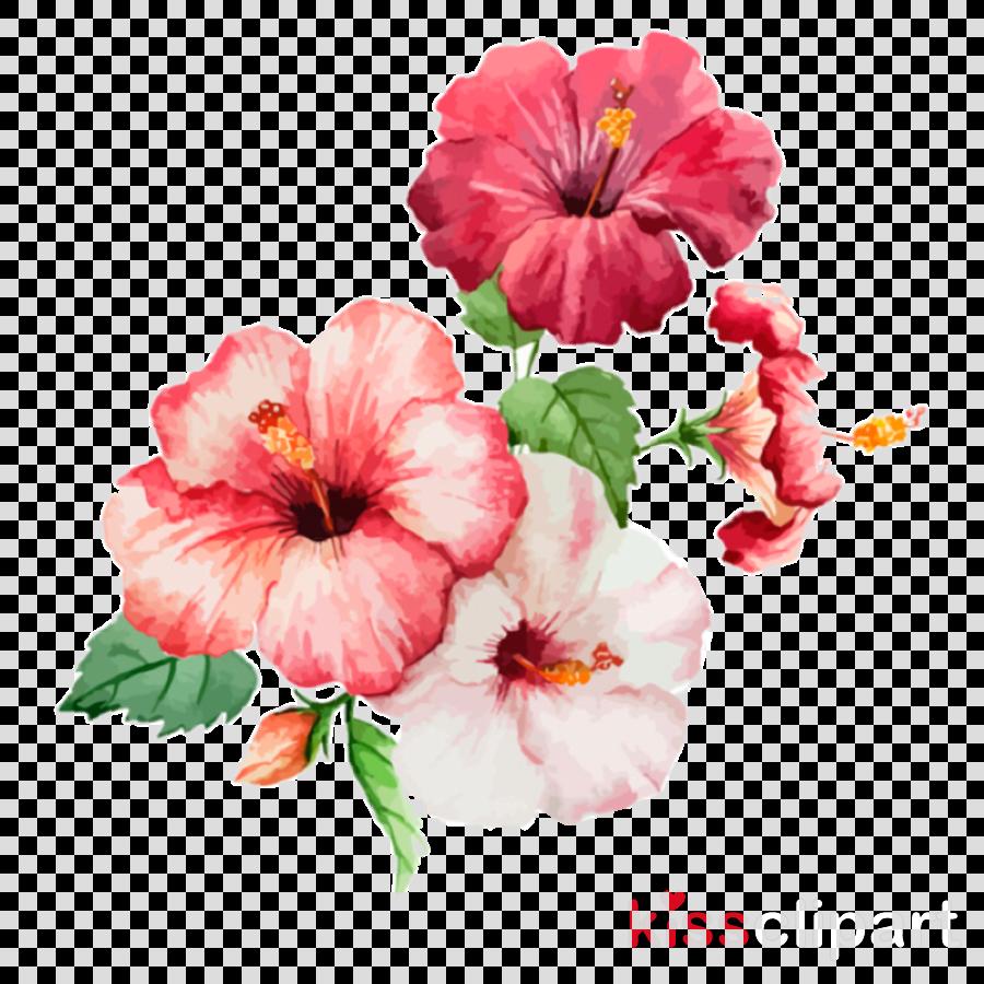 flower petal hawaiian hibiscus pink plant