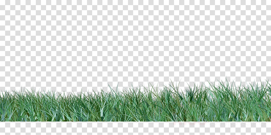 grass grassland green lawn natural environment