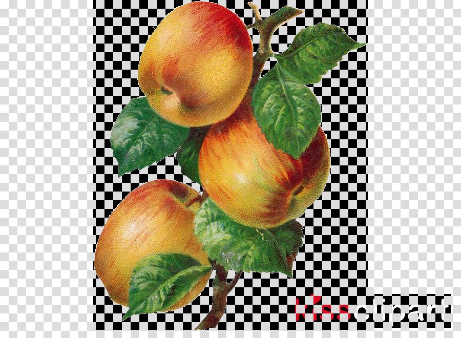 fruit plant food leaf apple