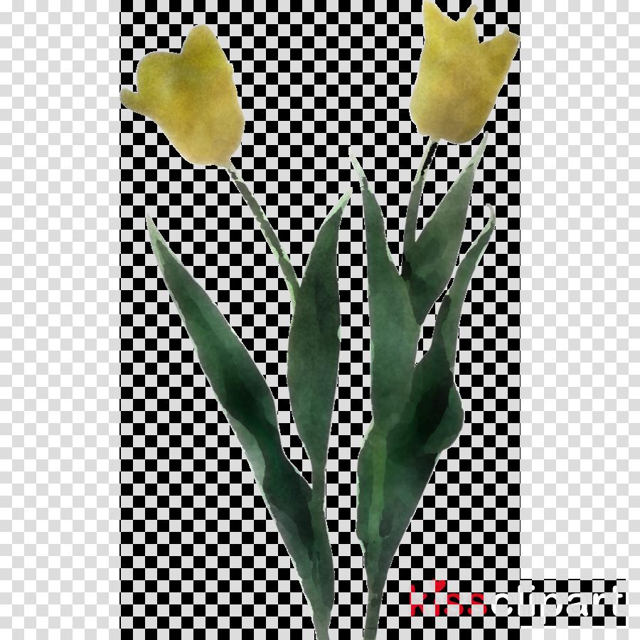 flower plant tulip yellow leaf