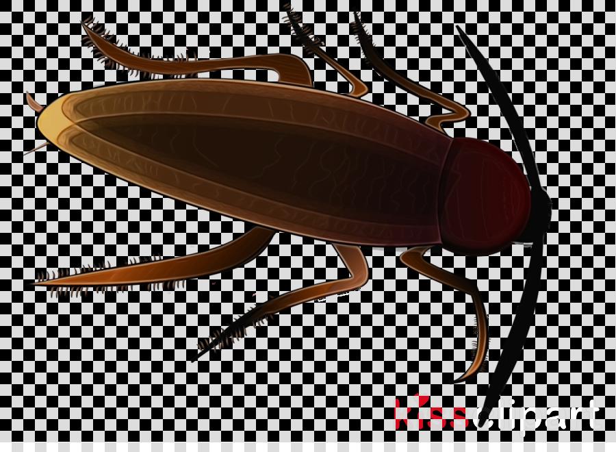 insect cockroach pest belostomatidae beetle