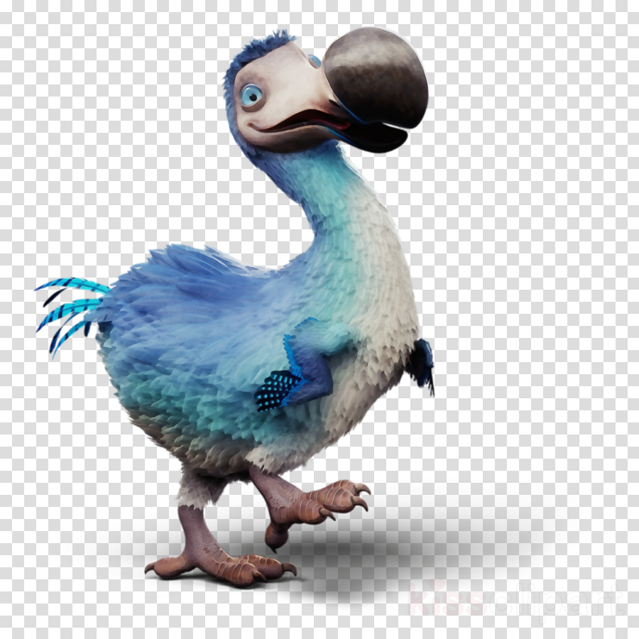 bird dodo pigeons and doves flightless bird beak