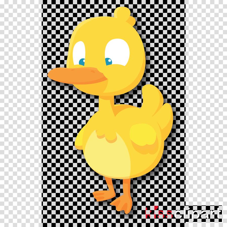 duck ducks, geese and swans bird water bird cartoon
