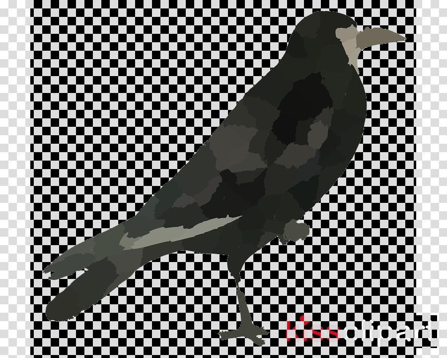 bird beak fish crow crow raven