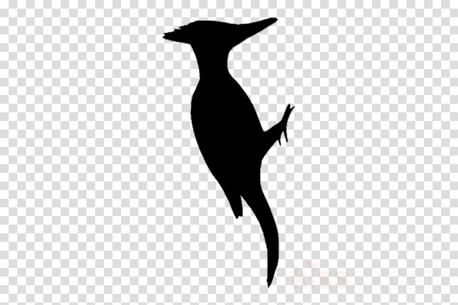 silhouette tail